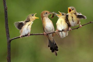 animales aéreos alimentación